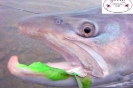 Moscas pensadas para pescar